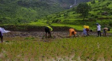 Maharashtra farmers to get sops for using solar pumps