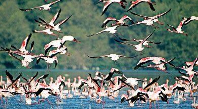 Impact of Gujarat solar park on avian flyway worries MoEF panel