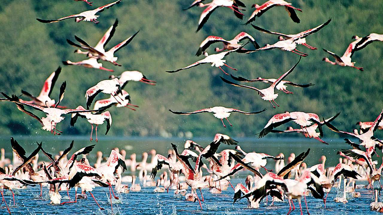 Impact of Gujarat solar park on avian flyway worries MoEF panel