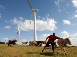 Africa needs cash, science for new model of green development – leaders