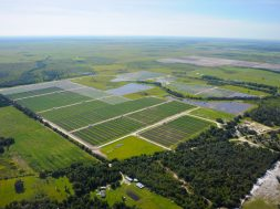 Florida utility plans world's largest battery combined with solar