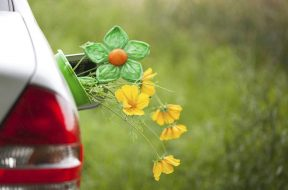 Plant-based fuels commercially viable- Study