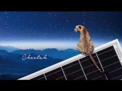 Jinkosolar's Cheetah Enabling Next-generation Wafer Designs