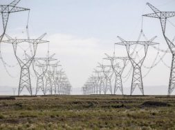 Great Indian Bustard nearing extinction due to high voltage power lines- Env Ministry