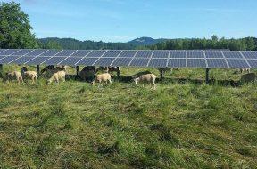 OSU-Solar-Panels-2