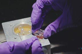 Single-Crystal MAPbI3 Perovskite Solar Cells Exceeding 21% Power Conversion Efficiency