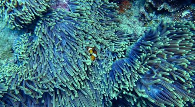 Sri Lanka's 90% Coral Reefs Dead Due to Pollution.