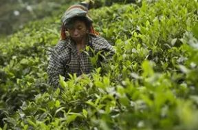 Tea planters sought 90 percent subsidy on installation of solar plants in tea industry