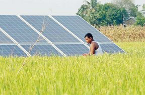 Govt shifting gears from diesel to solar