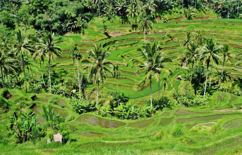 New regulations open the doors for green investment in Bali