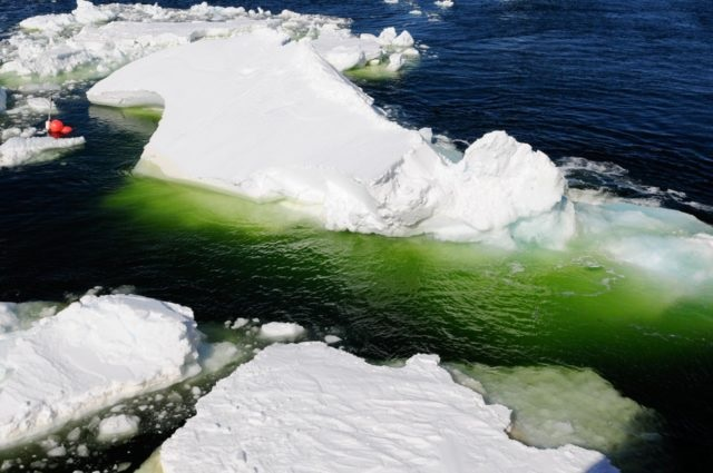 In Pics: Global Warming Causes Vast Chunks Of White Antarctica To Turn Spooky Green