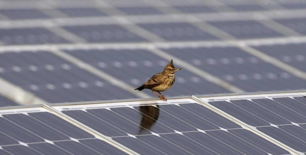 A new Argonne study will use AI to study the relationship between birds and solar projects