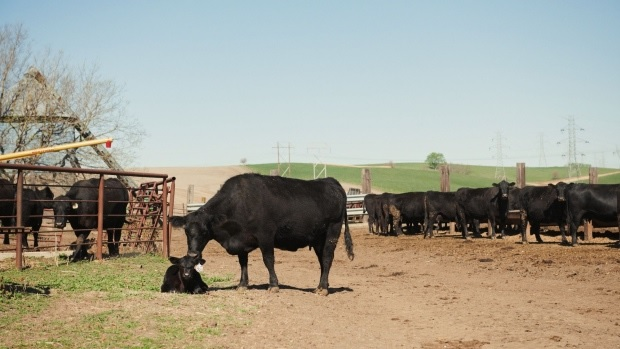 Duke targets cow poop in its first renewable gas investment