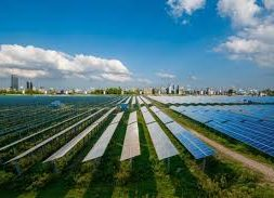 Chinese solar growth unhindered by pandemic