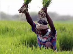 Haryana aims to provide 50k solar pumps to state's farmers