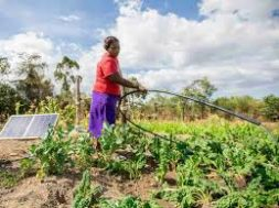 Partnership cultivated to deliver solar-powered farming in Togo