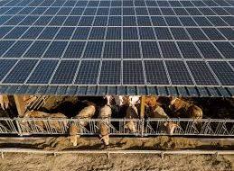 solar power plant at Dina farm