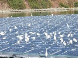 Budai egrets add solar farm to habitat
