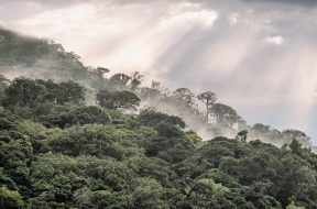 Why investing in nature is key to climate mitigation