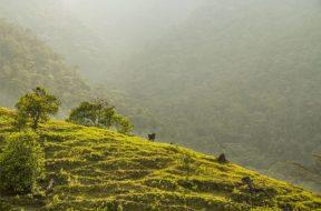 Colombia-NDC-agriculture-restoration-Anderson-WRI