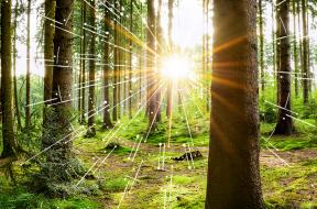 greener-future-through-sustainability_1140x550
