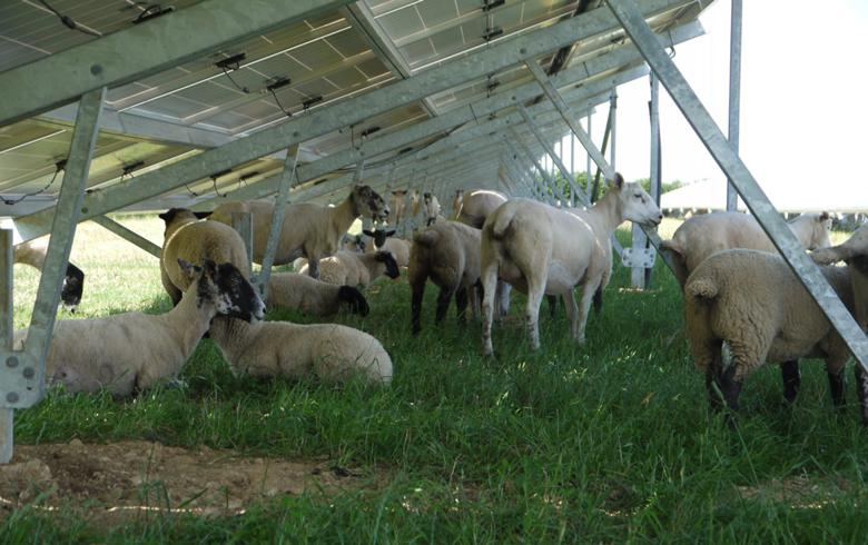 Shizen Energy obtains funds for farm-type solar plant in Japan