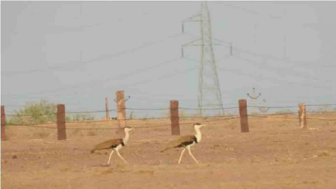 Great Indian Bustard: Supreme Court reserves order on plea to save endangered bird, pushes for under-grounding high-voltage power lines