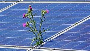 NTPC declares commercial operations for balance 15 MW of Bilhaur Solar PV Project