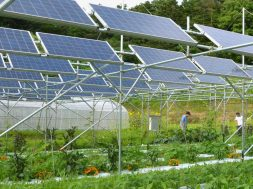 Solar power generation on agricultural land expands in Japan