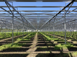 Shizen Energy completes 2.2 MW of solar plants in Japan