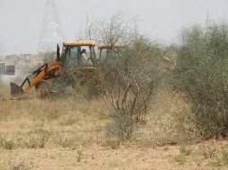 'Green' energy projects threaten to wipe off ancient 'orans' in Jaisalmer, Rajasthan