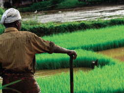 Indian Agricultural Firms To Issue Green Bonds to Finance Resilience Projects, Attracting Private Sector Interest